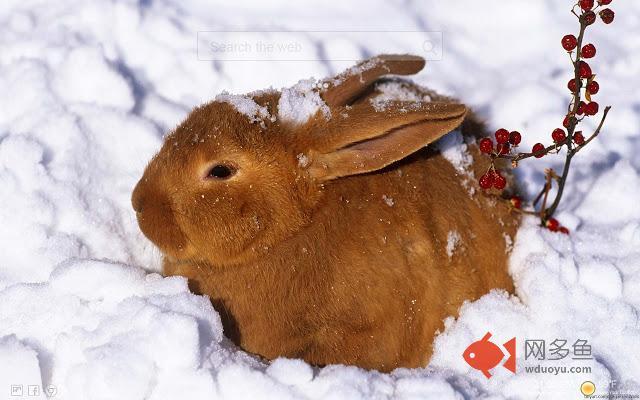 Cute Bunny Tab