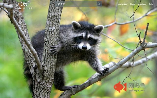 Raccoons Wallpapers Theme New Tab