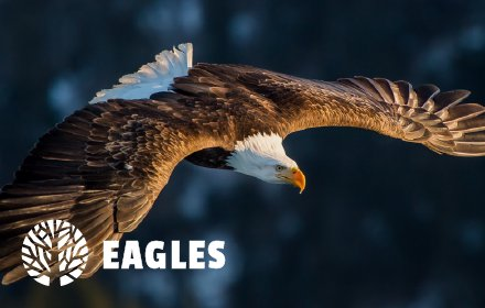 Eagles HD Wallpaper New Tab Theme插件截图