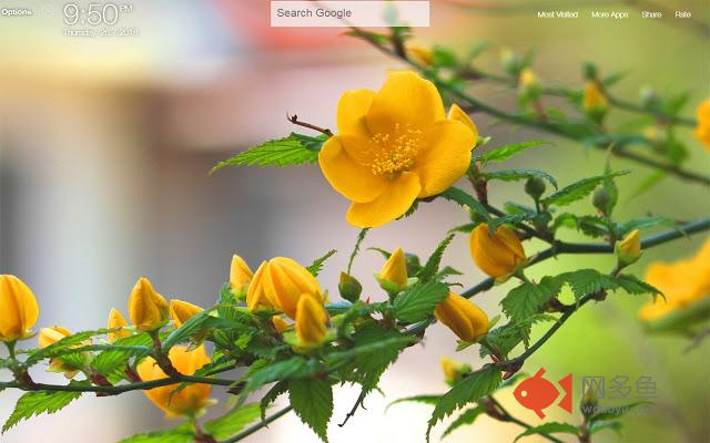 Yellow Flowers FullHD New Tab Wallpapers