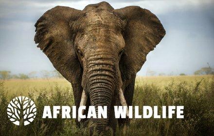 African Wildlife HD Wallpaper Theme插件截图