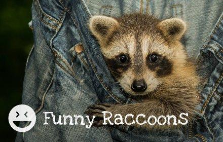 Funny Raccoons HD Wallpapers New Tab Theme插件截图
