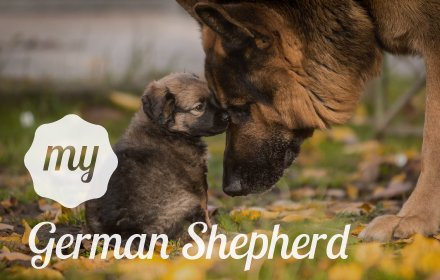 My German Shepherd HD Dog Wallpapers Theme插件截图