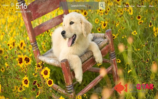 Personable Pets Wallpapers HD Theme插件截图